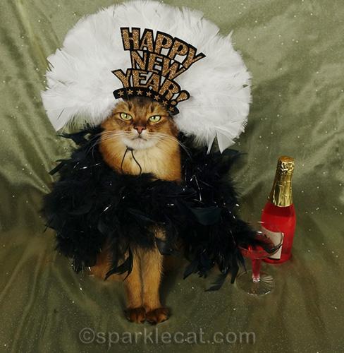 somali cat with Happy New Year Headdress