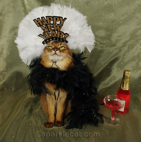 somali cat looking at her New Year headdress