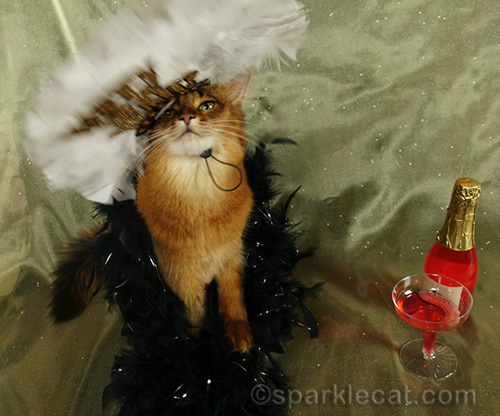 New Year headdress falling off somali cat