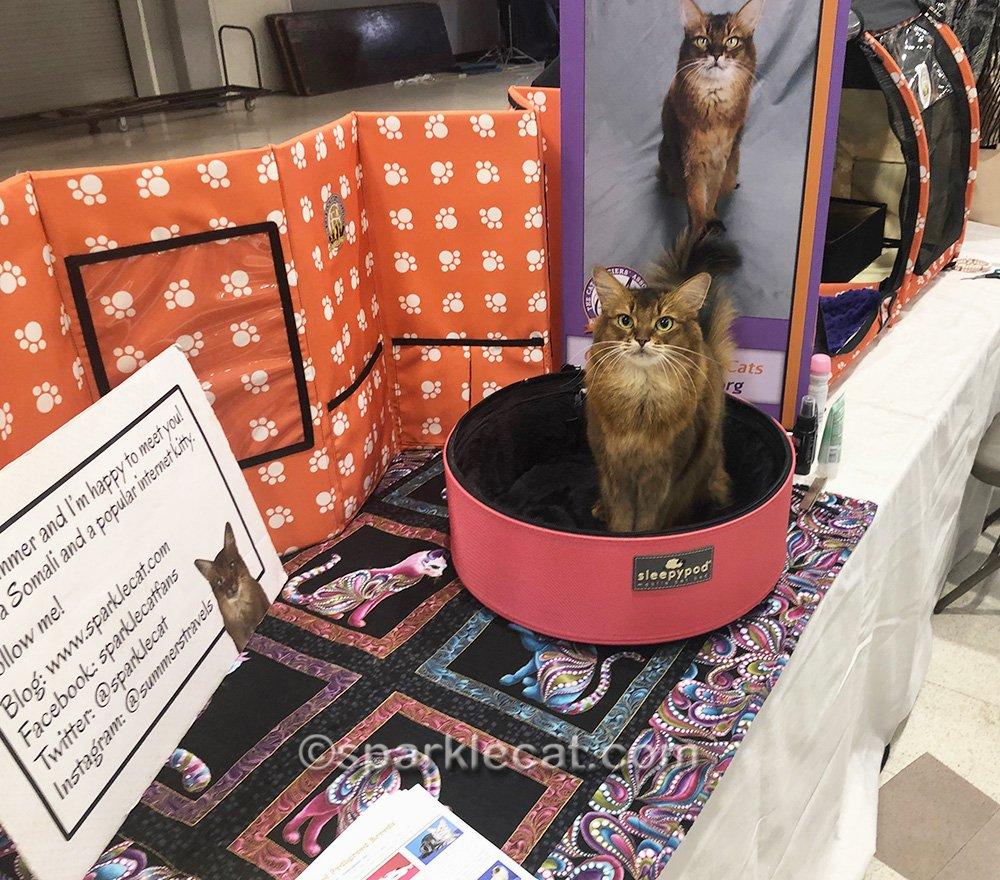 Ambassador cat working the cat show