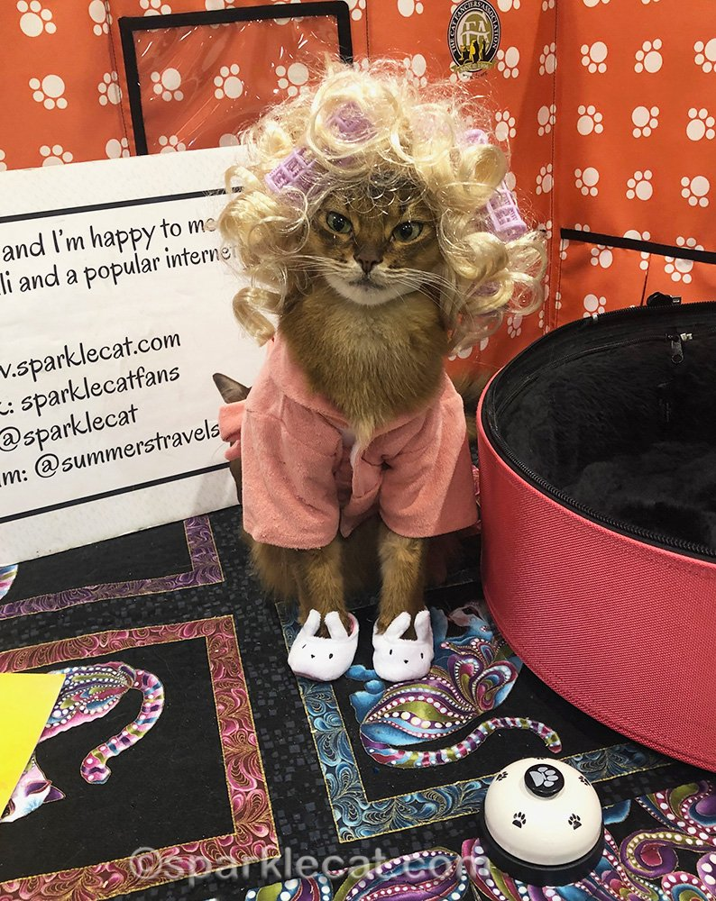 somali cat in crazy cat lady outfit