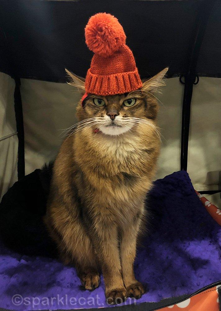 somali cat wearing orange-red knit cap