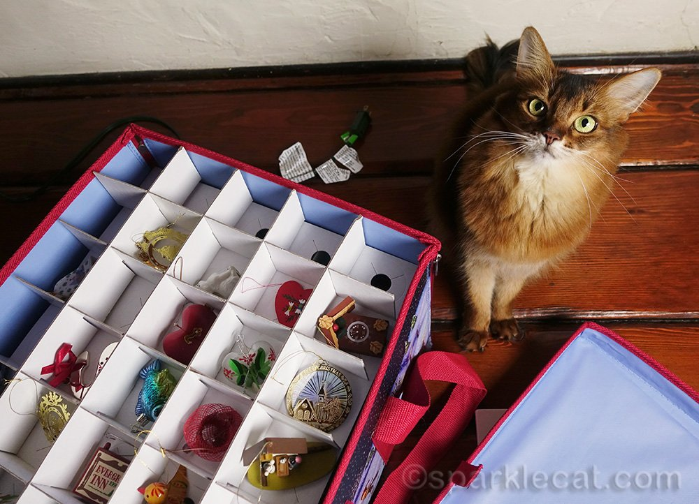 somali cat showing the Christmas ornaments in their box
