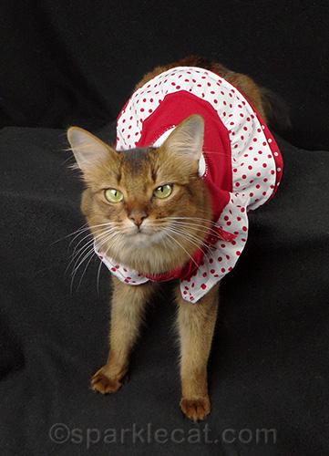 somali cat in a a cute red dress