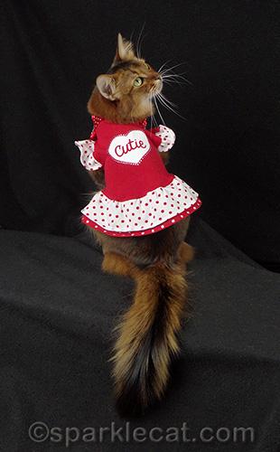 somali cat in a Cutie red dress