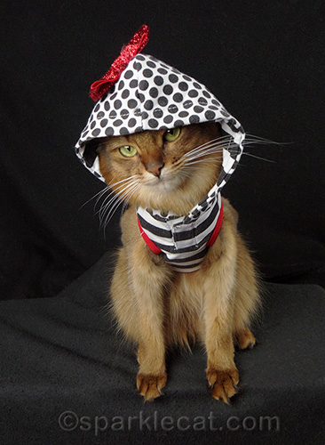 Somali cat in a hooded outfit