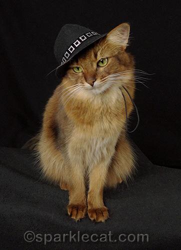 Somali cat in a black panama hat