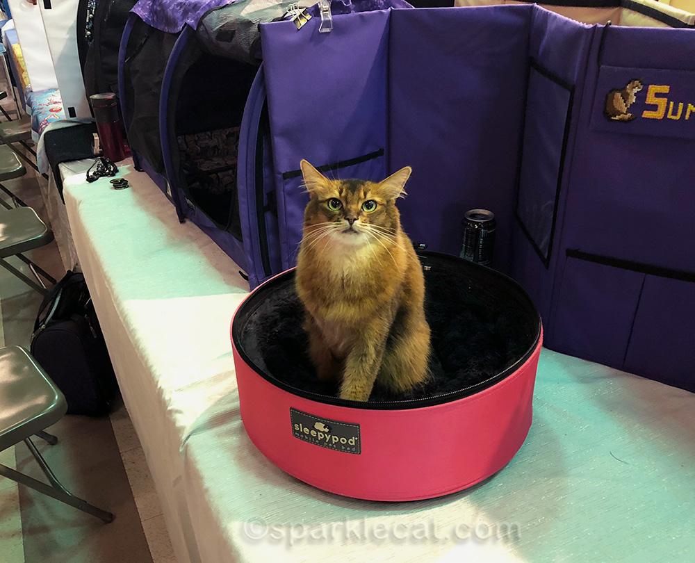 My Fun Cat Show Weekend in Ontario (California)   SparkleCat