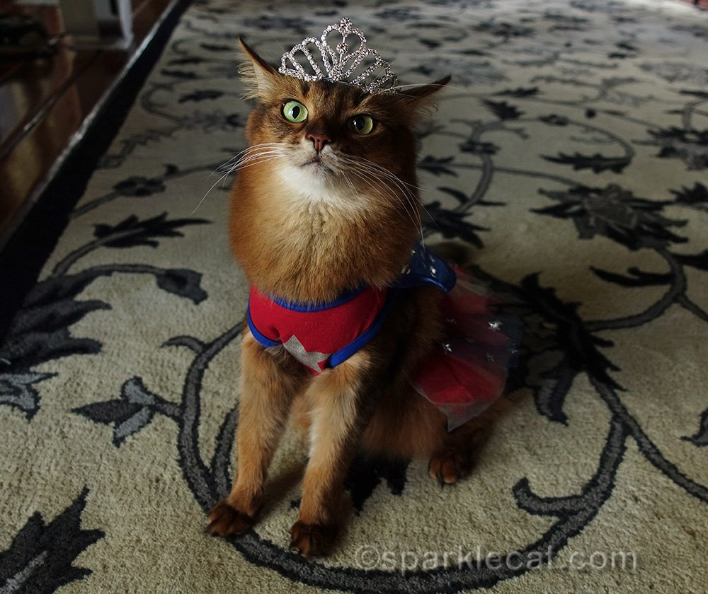 somali cat questioning wearing the tiara with her Wonderkitty costume