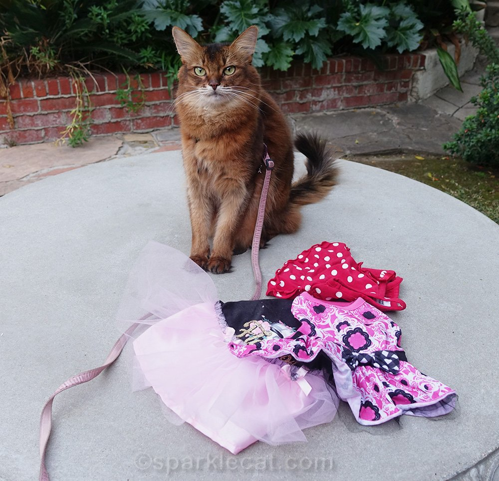 Summer is bummed because she has nothing new to wear for Dress Up Your Pet Day, and is stuck with some old cat dresses.