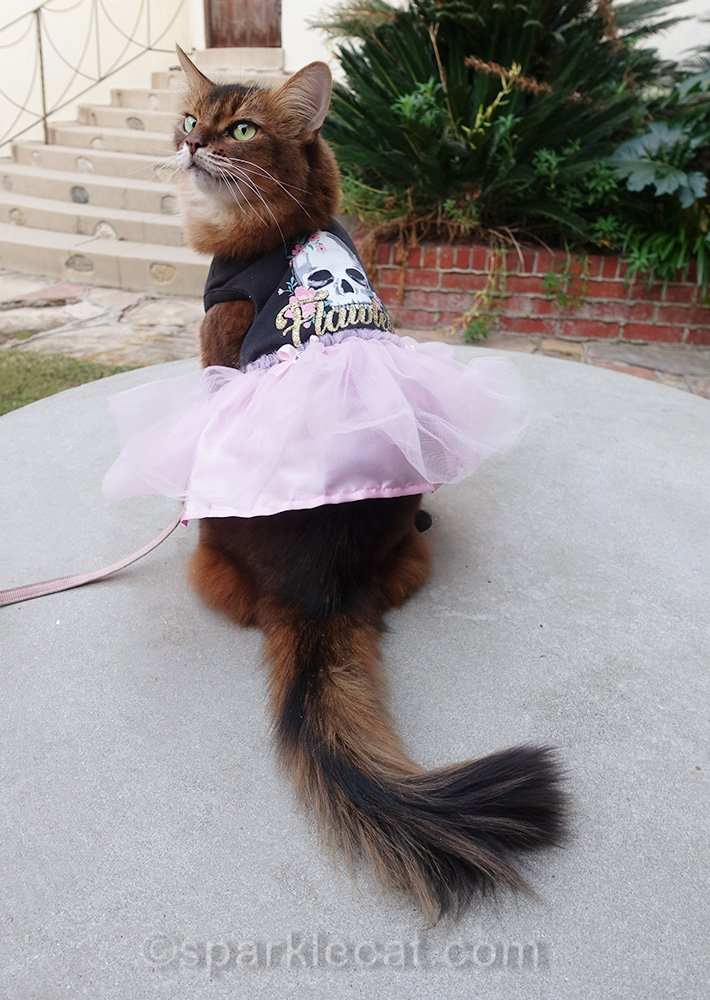 somali cat showing off back skull print of dress with pink tulle skirt