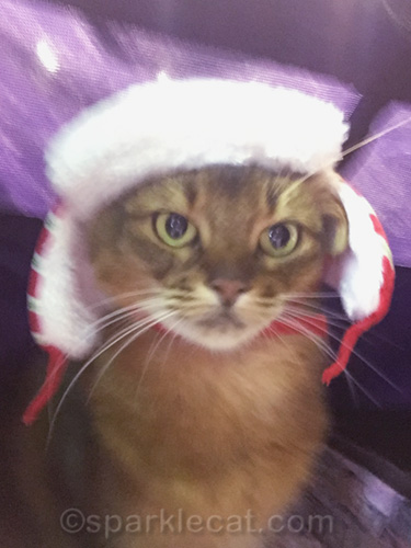 blurry selfie of somali cat wearing winter hat