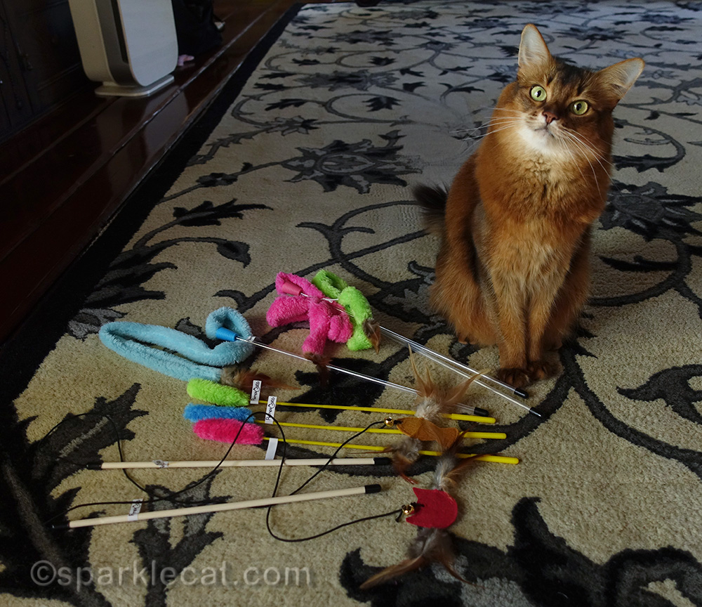 somali cat posing with RompiCatz teaser toys