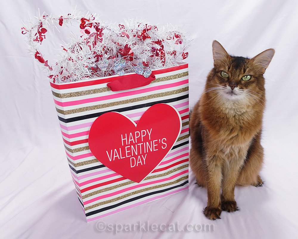 Summer offers up her latest Valentine's gift guide for cats and cat lovers.