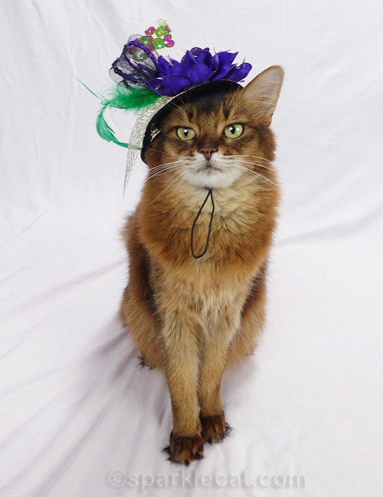 Somali cat wearing a fun Mardi Gras hat
