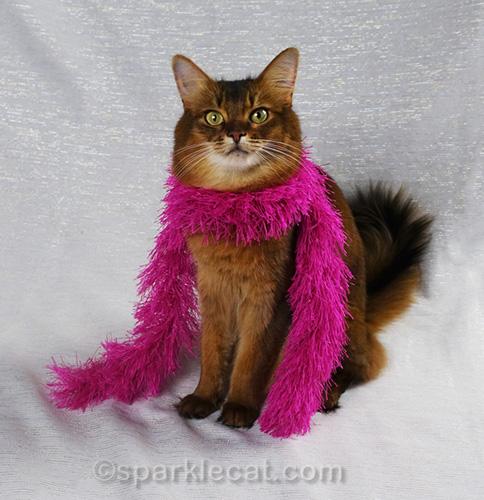 somali cat in pink fashion boa