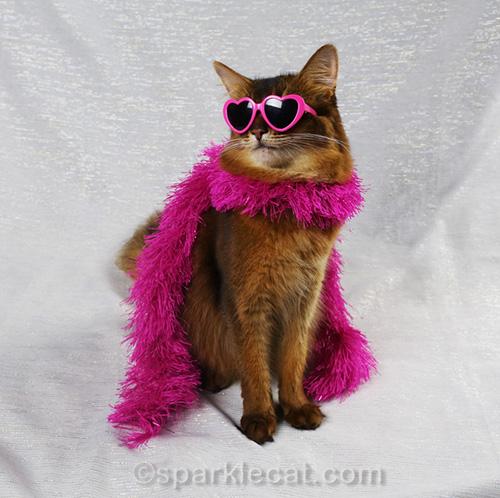 glam somali cat in pink fashion boa and heart-shaped sunglasses