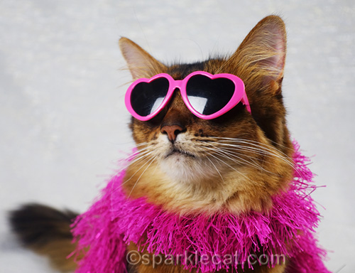 somali cat in pink heart-shaped sunglasses close up