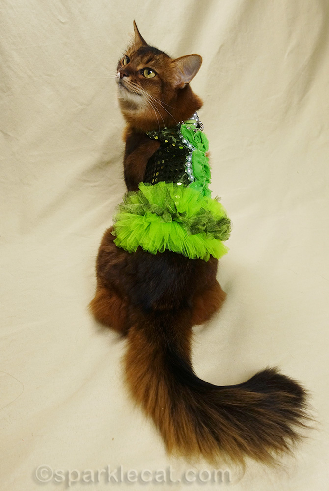somali cat modeling found dress from the back