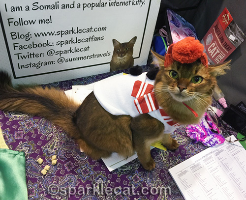 somali cat in snowman outfit