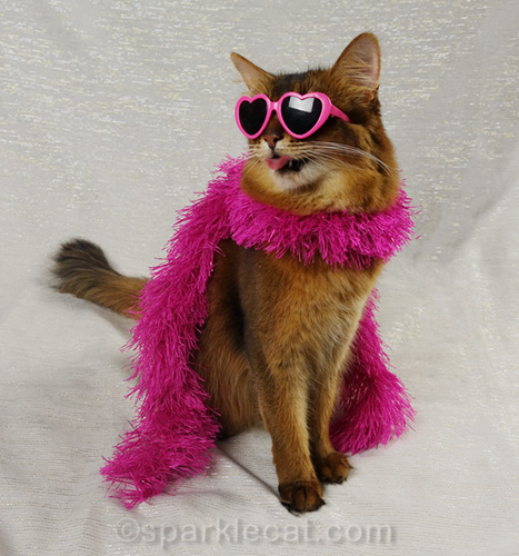 not-so glam somali cat giving a raspberry
