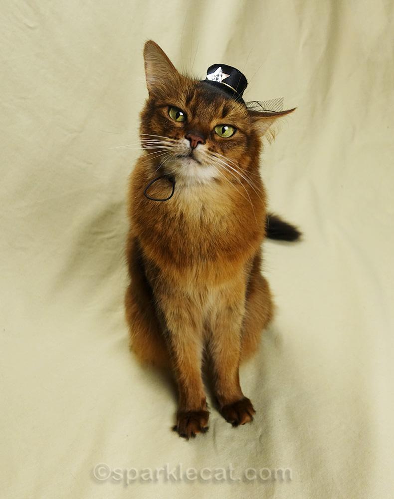 somali cat with tiny new year hat