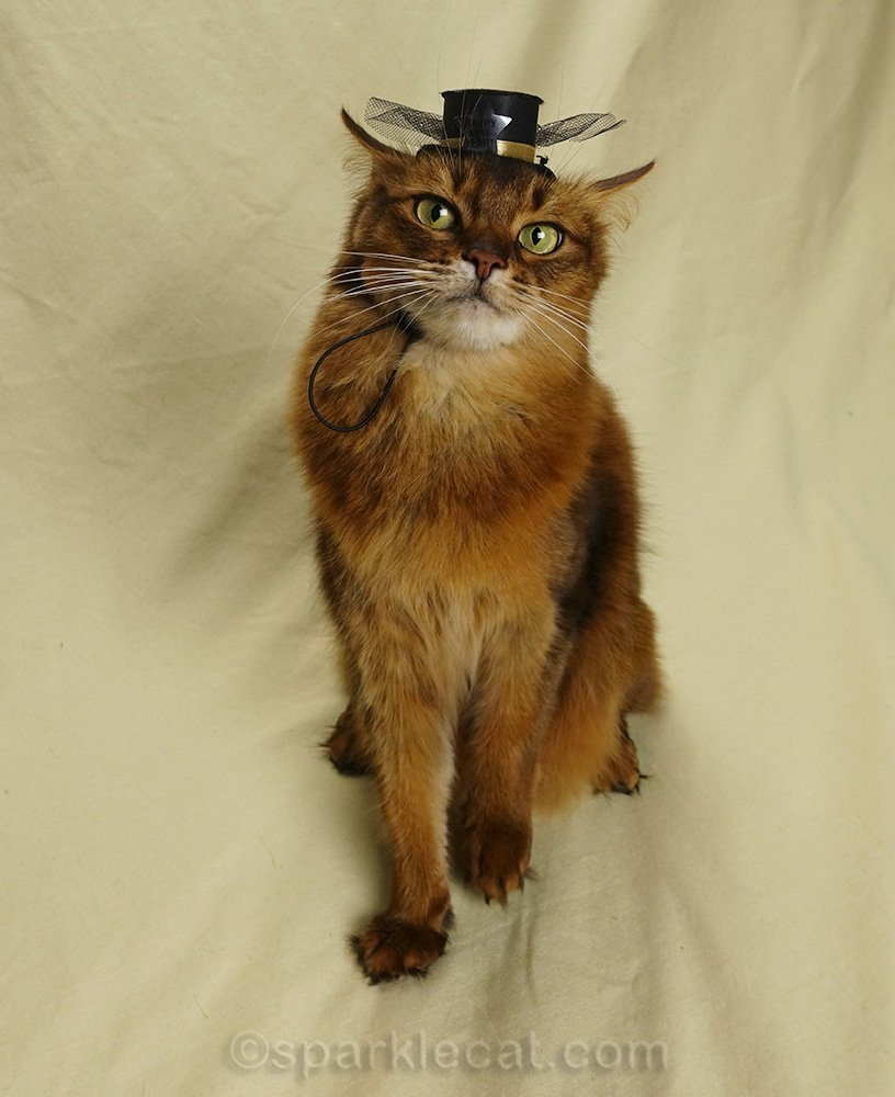 somali cat wearing new year's eve hat