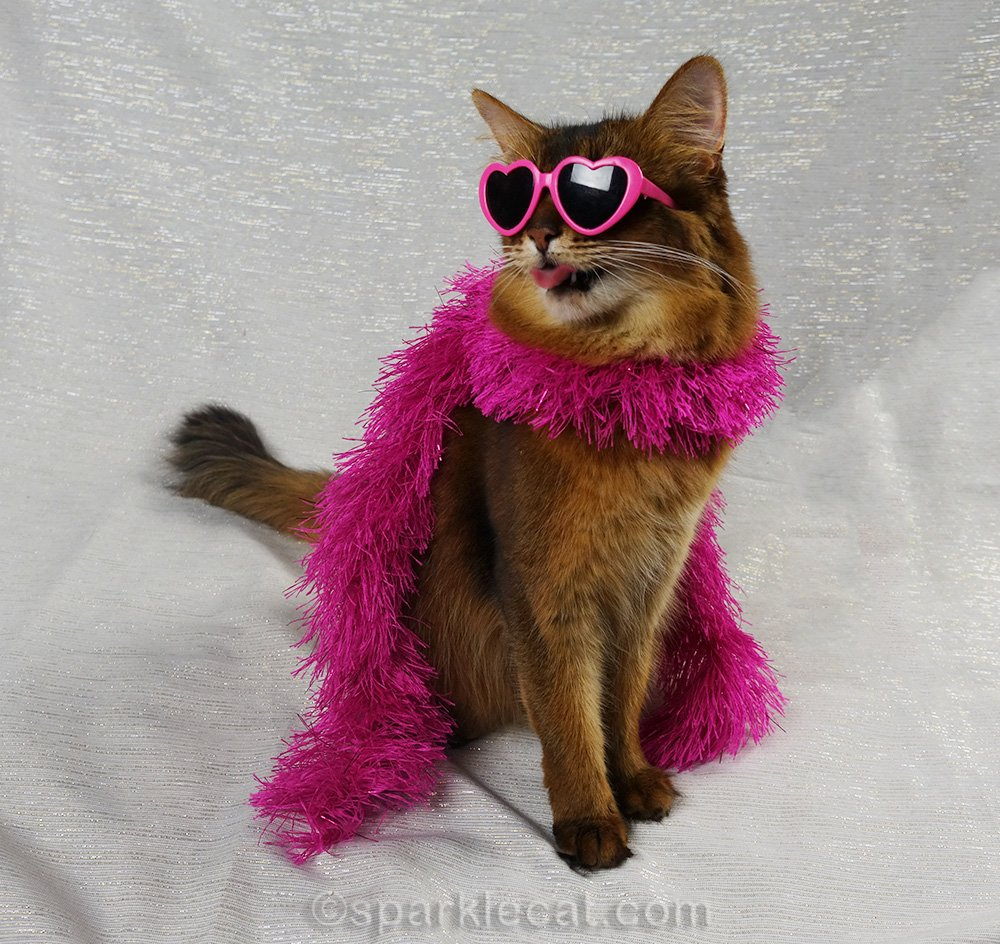 glam somali cat giving raspberry