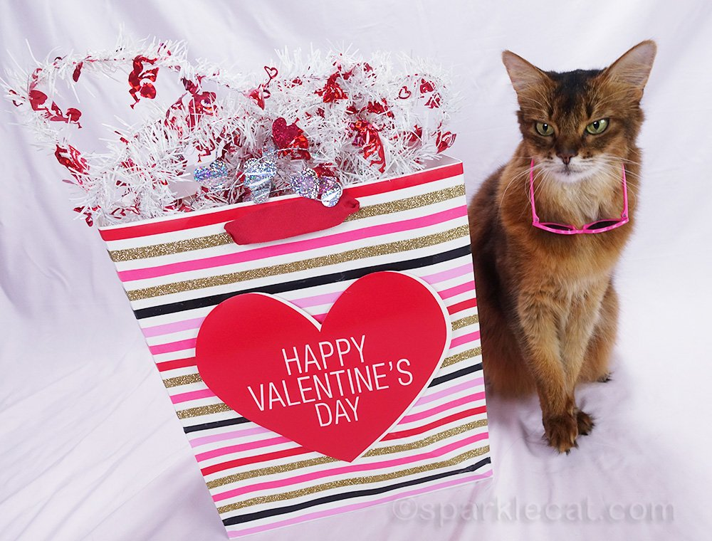 somali cat with Valentine's Day gift bag, and sunglasses falling off her face