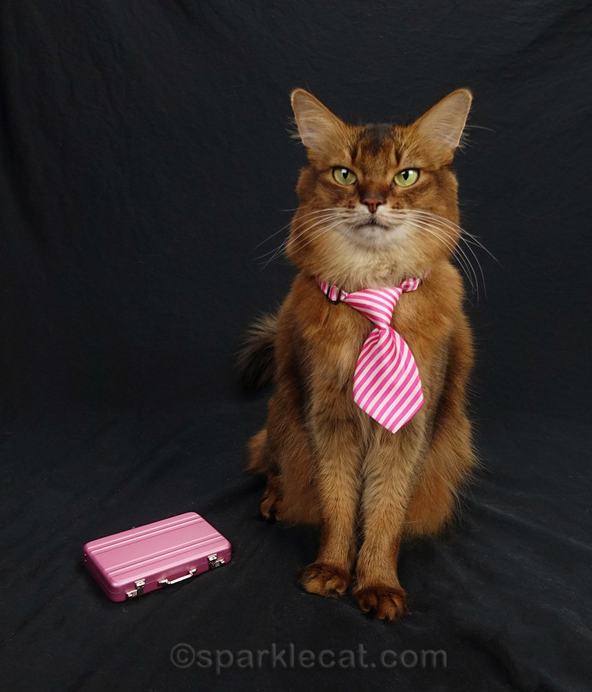 somali cat in necktie and briefcase