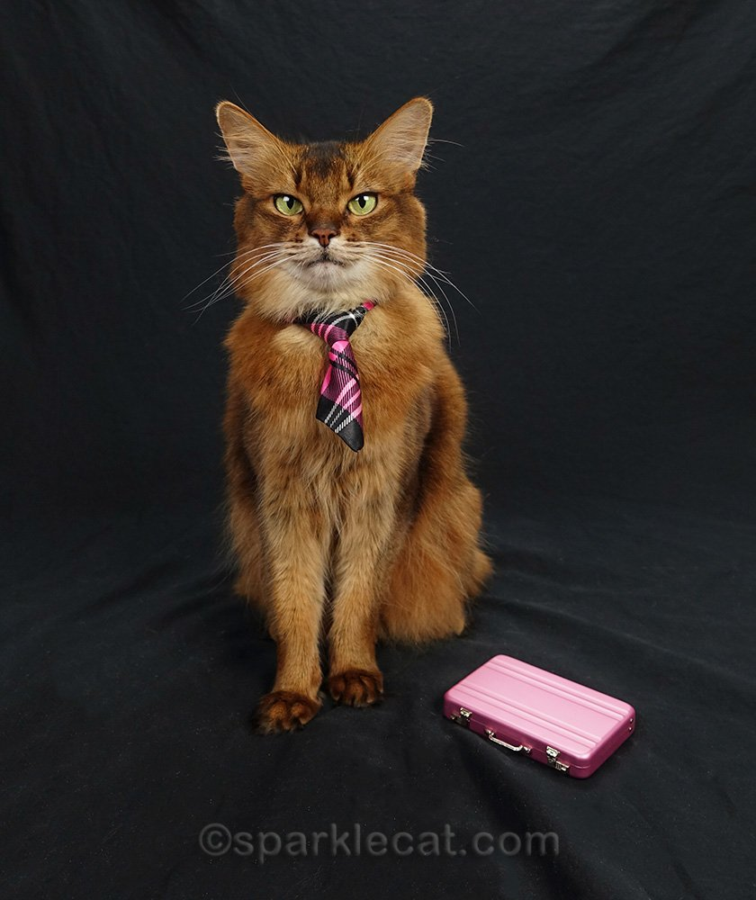 somali cat in plaid necktie with briefcase