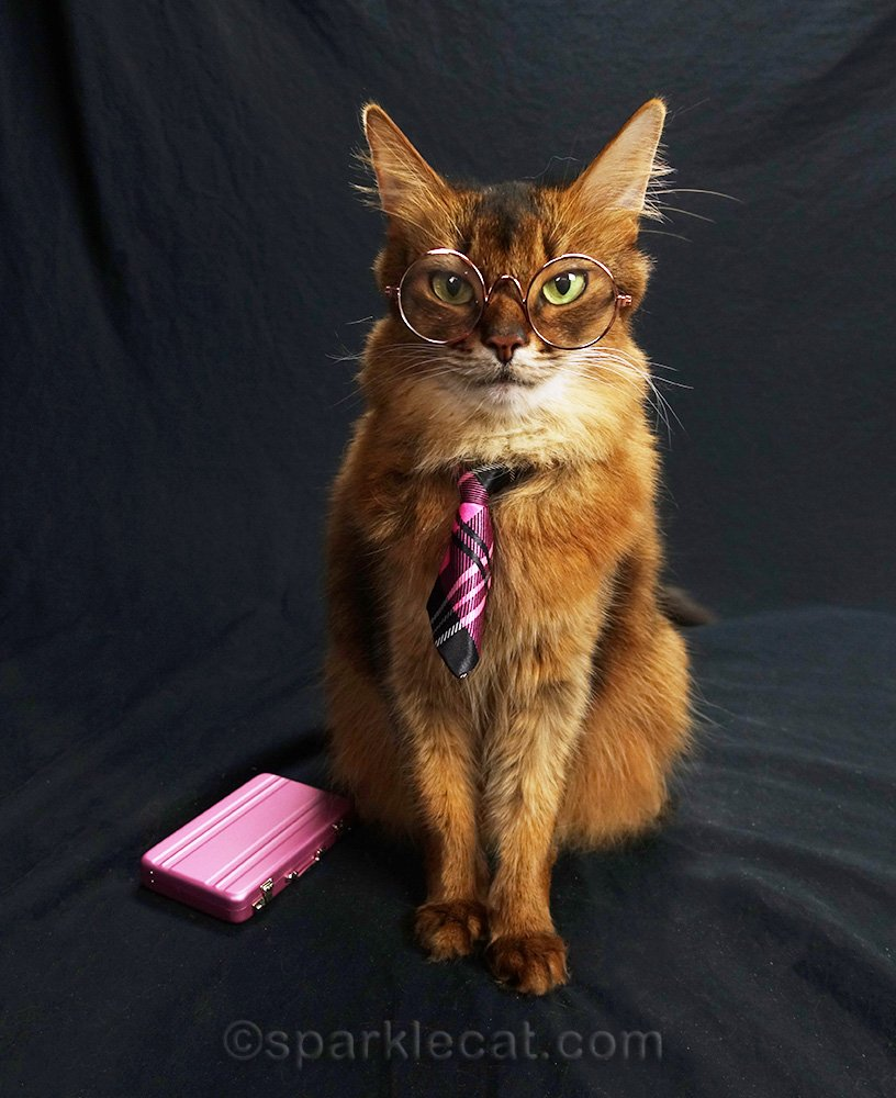 somali cat with glasses, necktie and briefcase