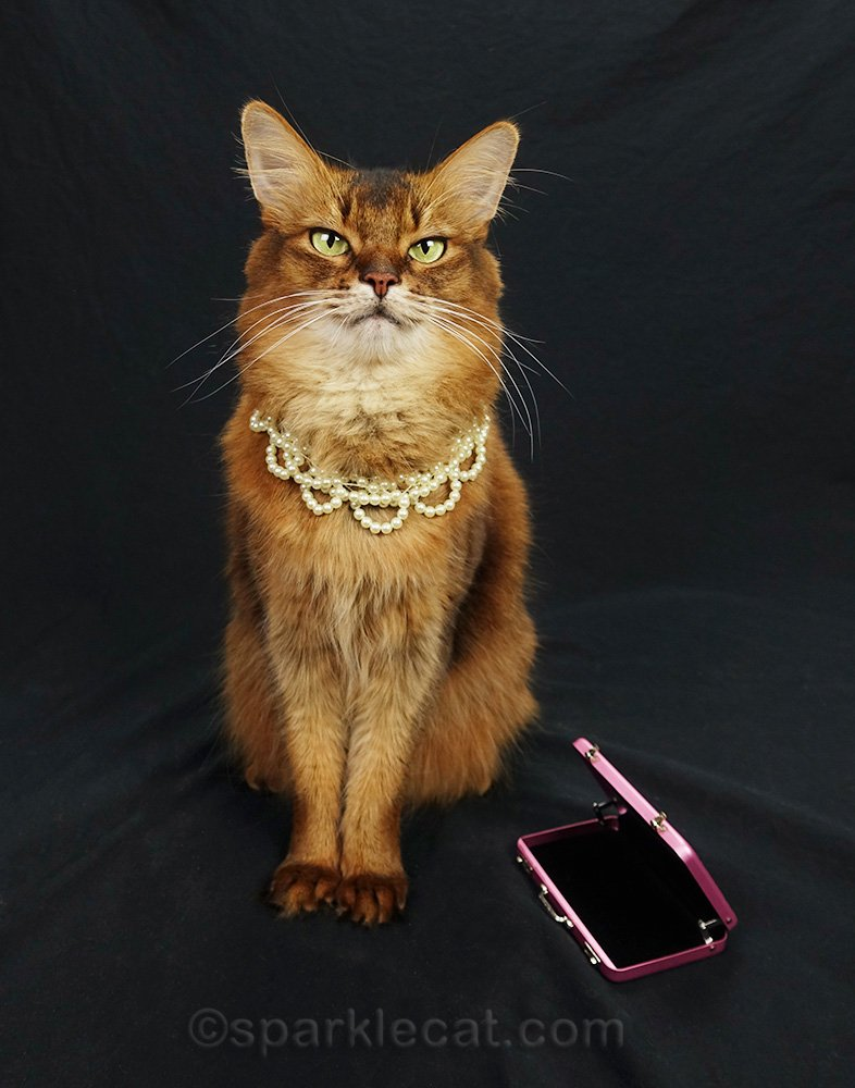 somali cat wearing pearls with open briefcase