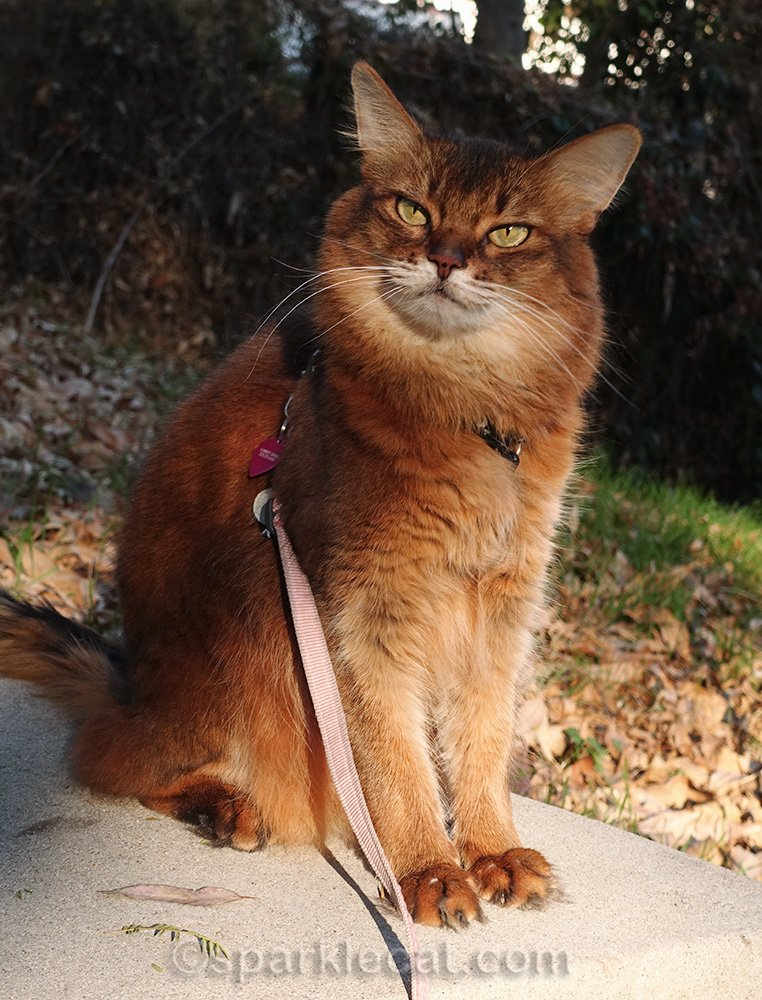 Summer enjoys a warm day outside on her leash.