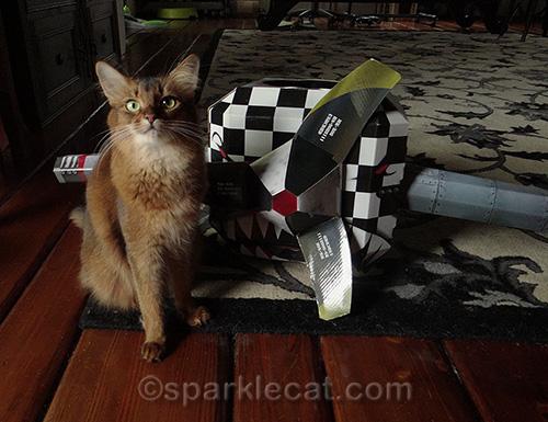 Somali cat, cat airplane playhouse
