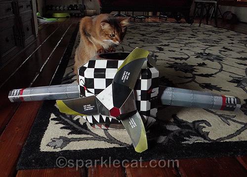 Somali cat explore cat airplane playhouse