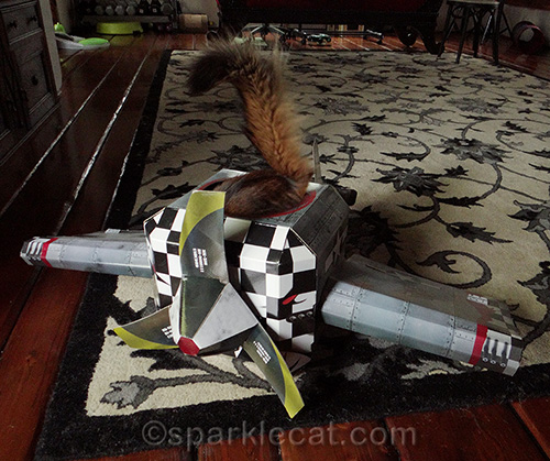 Somali cat in cat airplane playhouse