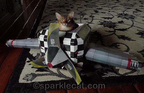Somali cat having fun in a cat airplane playhouse
