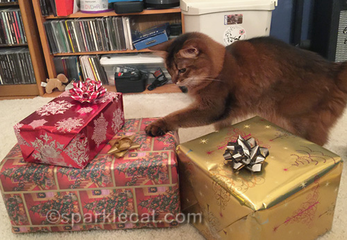 somali cat helping with gift bows