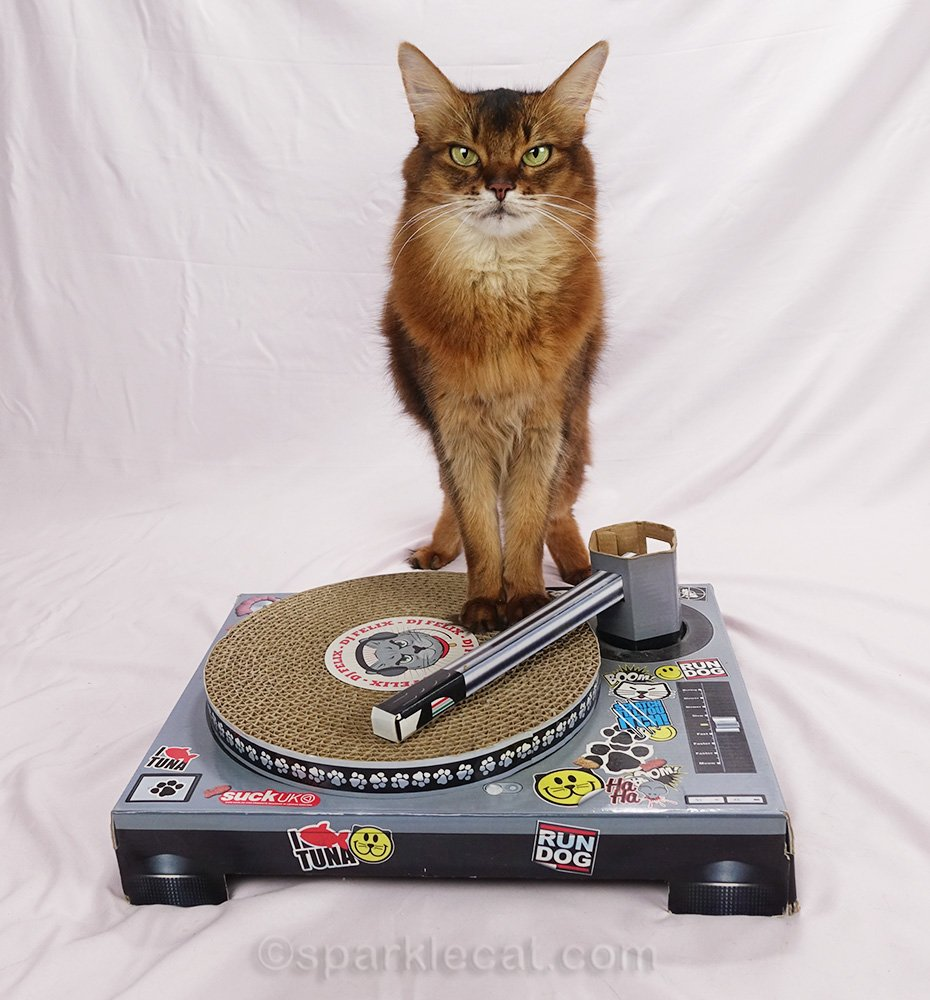 Summer tries on a variety of DJ kitty styles to see which one suits a cat DJ best.