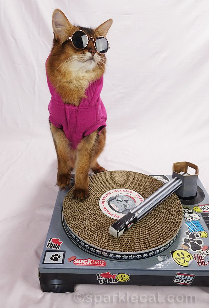 somali cat DJ in hoodie and sunglasses