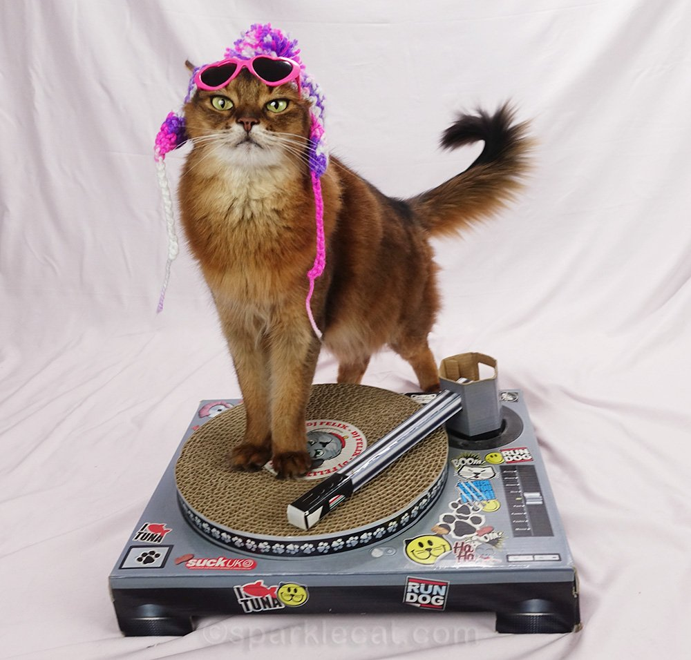 somali cat trying to DJ in knit cap and pink sunglasses