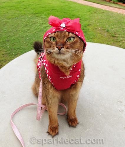 somali cat in hoodie dress