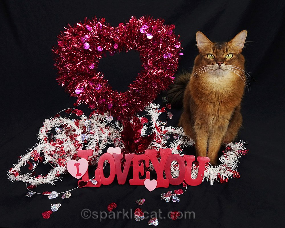 Summer shares some Valentine's Day gifts for cat lovers and cats that she found on Etsy.