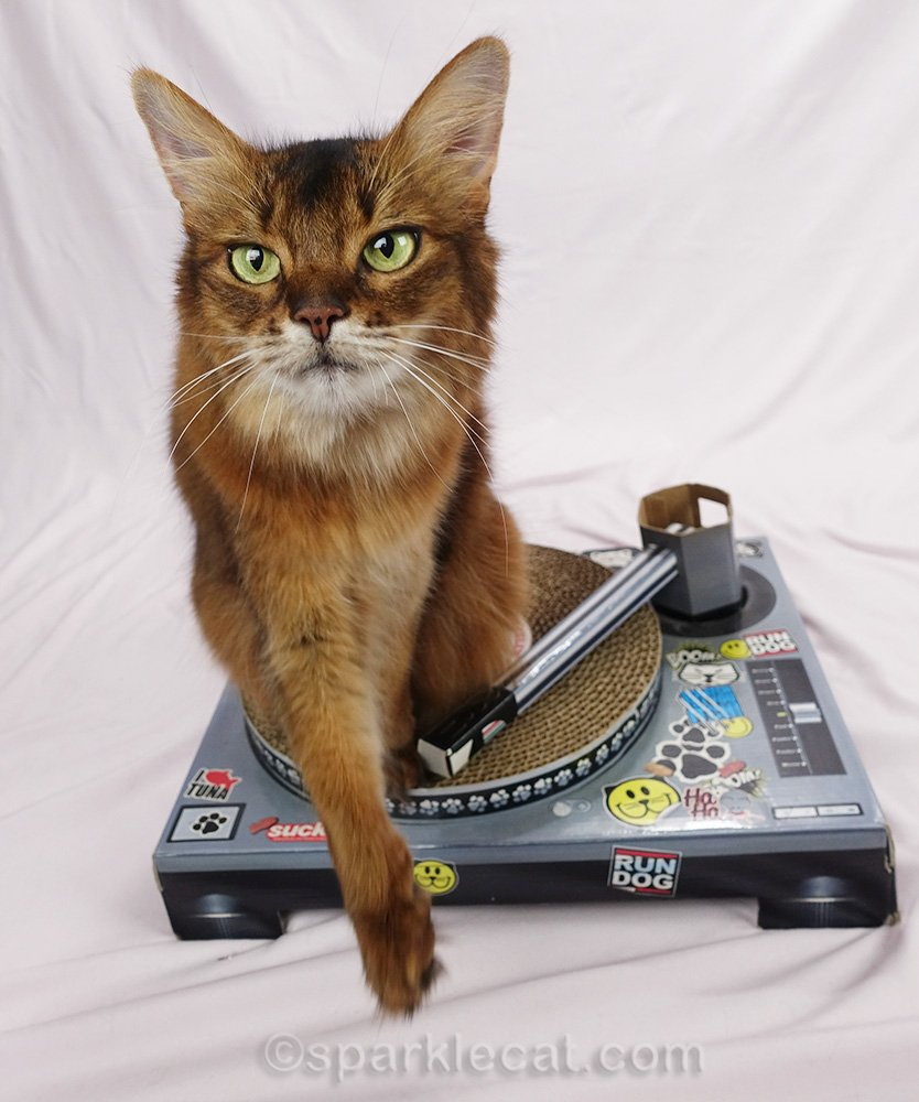 Summer shares some bloopers from her DJ cat photo session.