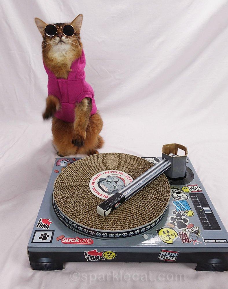 somali cat DJ rocking out