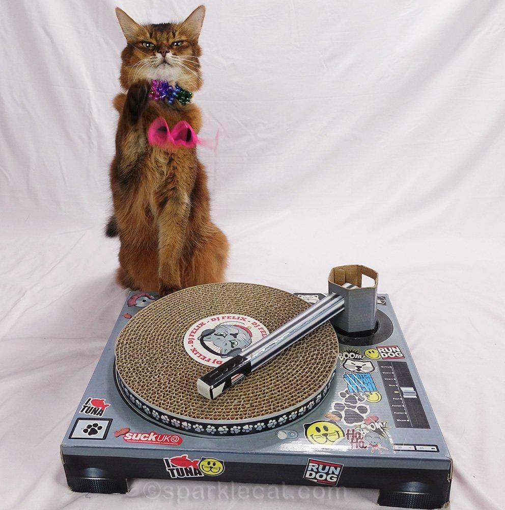 somali cat DJ flubbing up a photo