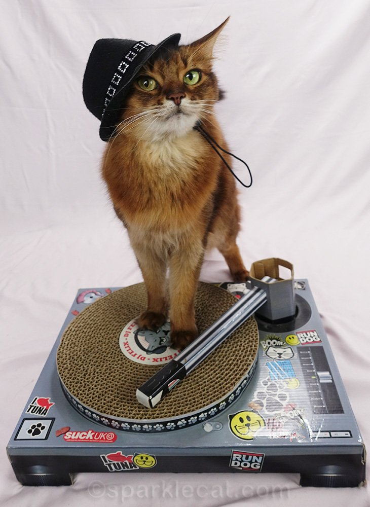 somali cat DJ with fedora