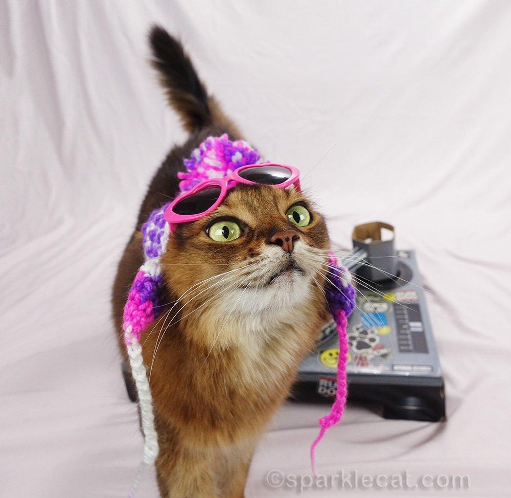 somali cat DJ wondering where the treats are