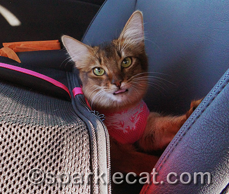 No, I don't want to go back in the carrier